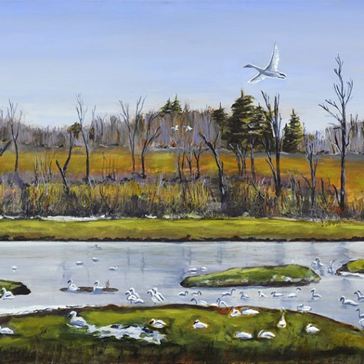 cropped-swan-sanctuary.jpg